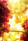 艺术成熟葡萄 库存图片