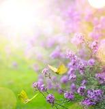 艺术抽象春天背景;春天花和蝴蝶 免版税库存照片