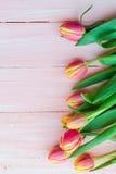 艺术抽象背景春天郁金香木设计 免版税库存照片