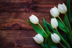 艺术抽象背景春天郁金香木设计 库存照片