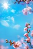 艺术抽象花卉春天背景 免版税库存照片