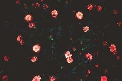 艺术摄影颜色 在黑暗的背景的花 免版税库存照片
