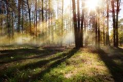 艺术晴朗的秋天自然背景;10月森林风景 库存图片