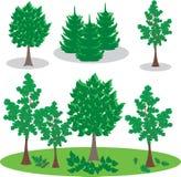 艺术树和杉木例证 Eco公园 免版税库存图片