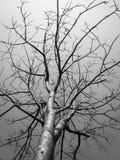 艺术树 免版税库存照片