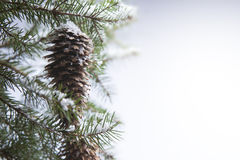 艺术森林冬天 图库摄影