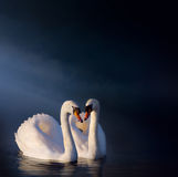 艺术浪漫天鹅夫妇 免版税库存照片