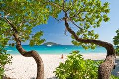 艺术海岛similan南泰国结构树 库存图片