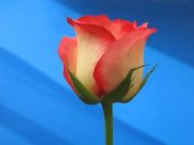 艺术玫瑰色你 免版税库存图片