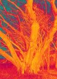 艺术疯狂的橙树 免版税库存图片