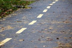 艺术秋天背景数字式秋天叶子 在森林公路一边的黄色叶子 库存照片