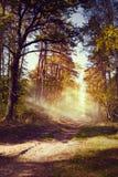 艺术美丽的秋天森林 免版税库存照片