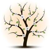 艺术美丽的结构树 库存图片