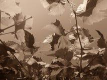 艺术背景框架葡萄离开纸纹理水彩 库存照片