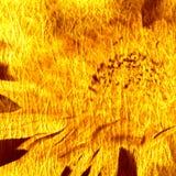 艺术背景花卉grunge 免版税库存图片