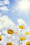 艺术花卉春天或夏天背景 免版税库存图片