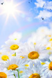 艺术花卉春天或夏天背景 库存图片