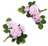 艺术花卉设计要素 免版税库存照片