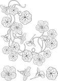艺术花旱金莲属植物nouveau样式纹身花刺 库存照片
