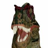 艾伯塔龙恐龙头 库存图片