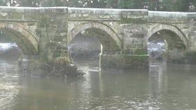 艾塞克斯桥梁-驮马桥梁Shugborough庄园和了不起的海沃德 股票录像
