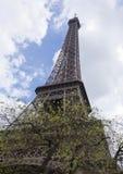 艾菲尔铁塔的看法有开花的树的 免版税库存照片