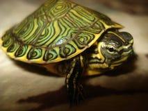 细节乌龟 免版税库存图片