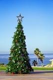 节假日圣诞树加利福尼亚太平洋海岸 免版税库存图片