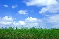 节假日夏天 图库摄影
