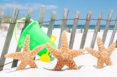 节假日海星 库存照片