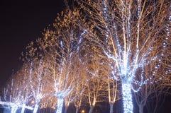 节假日点燃结构树 免版税库存照片