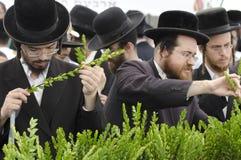 节假日犹太sukkot 免版税库存图片