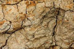 细节土壤区域 图库摄影