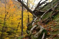 细节在跳动道路的森林 免版税库存图片