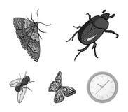 节肢动物昆虫甲虫,飞蛾,蝴蝶,飞行 昆虫在单色样式传染媒介标志库存设置了汇集象 免版税库存图片