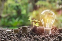 节能生长在堆的电灯泡和树在自然的硬币 库存照片
