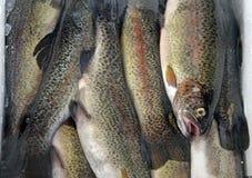 细节鱼 免版税库存图片