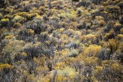 细节,堡垒岩石国家公园,中央俄勒冈 免版税库存图片