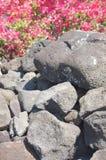 细节,从古老火山爆发的粗砺的熔岩, 库存图片