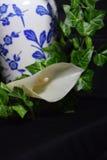 水芋属Lilly常春藤和开花的蓝色和白色花瓶 库存照片