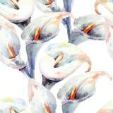 水芋百合花,水彩例证 免版税库存图片