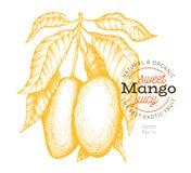 芒果分支例证 手拉的传染媒介热带果子例证 被刻记的样式果子 葡萄酒异乎寻常的食物例证 库存例证