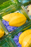 芒果和紫色黏米饭 库存图片