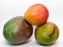 芒果柑橘 库存照片