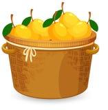 芒果篮子  库存例证