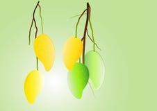 芒果背景,绿色芒果和黄色垂悬导航例证 库存图片
