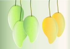 芒果背景,绿色芒果和黄色垂悬导航例证 免版税图库摄影