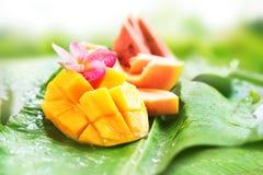 芒果西瓜番木瓜瓜结果实热带 免版税库存照片
