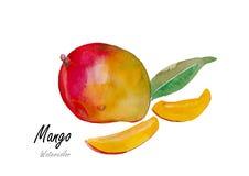 芒果 在白色背景w,水彩,花,花,水,例证,背景的手拉的水彩绘画, 库存照片