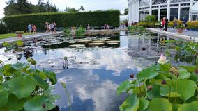 芙烈达・卡萝艺术,庭院,生活第2部分28 免版税库存照片